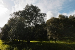 masoni-becciu-gallery-2